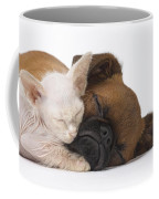 Small Brabant Griffon, Petit Brabancon, Puppy Dog With Laperm Kitten Coffee Mug