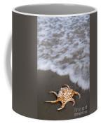 Spider Conch Shell Coffee Mug
