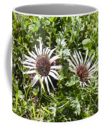 Stemless Carline Thistle Carlina Acaulis Coffee Mug