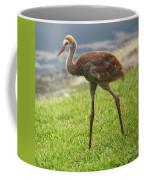 Sweet Juvenile Sandhill Crane Coffee Mug