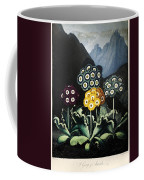 Thornton: Auriculas Coffee Mug