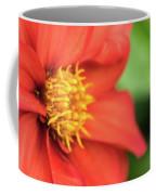 Tithonia Rotundifolia, Red Flower Coffee Mug