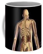 Transparent View Of Human Body Showing Coffee Mug