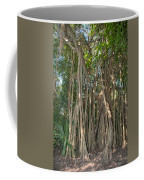 Trees With Aerial Roots At The Coba Ruins  Coffee Mug
