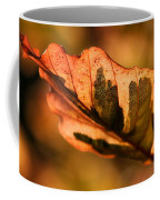 Tri-color Beech In Autumn Coffee Mug