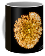 Wasp Nest, X-ray Coffee Mug