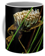 Water Beetle Brooding Eggs Coffee Mug