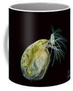 Water Fleas Simocephalus Sp., Lm Coffee Mug