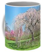 Weeping Cherry Tree Coffee Mug