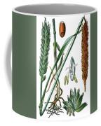 Wheat, Triticum Vulgare Coffee Mug