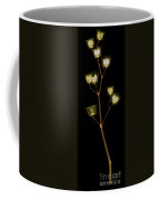 X-ray Of The Velvet Leaf Seed Pods Coffee Mug