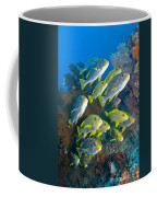 Yellow And Blue Striped Sweeltip Fish Coffee Mug by Mathieu Meur