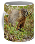 Yellow-bellied Marmot Coffee Mug