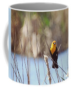 Yellow-headed Blackbird Coffee Mug