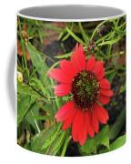 10-27-16--1980 Echinacea Cheyenne Spirit Don't Drop The Crystal Ball Coffee Mug