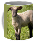 Spring Lamb Coffee Mug