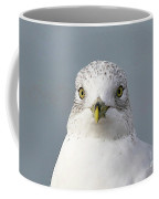 11-15-2009img_1130ab Coffee Mug
