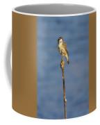 Sedge Warbler Coffee Mug