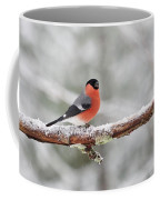 Eurasian Bullfinch In Winter Coffee Mug