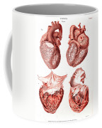 Heart, Anatomical Illustration, 1814 Coffee Mug
