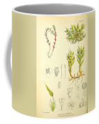 Illustrations Of The Flowering Plants And Ferns Of The Falkland Islands Coffee Mug