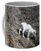 Dahl Sheep, Turnigan Arm Coffee Mug