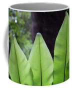Rainforest At Foxground, Kiama Coffee Mug