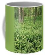 146112 Ferns In Pisgah Nat Forest V Coffee Mug