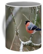 Eurasian Bullfinch Coffee Mug