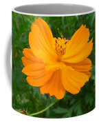 Australia - Yellow Flowers Of The Cosmos Carpet Coffee Mug