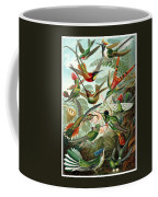1899 Hummingbird Species Art Forms Of Nature Print Coffee Mug