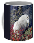 1m4900 Mountain Goat Near Mt. St. Helens Coffee Mug