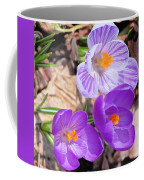 1st Flower In Garden 2010 Photo Coffee Mug