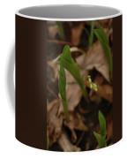 1st Lily Of Spring Coffee Mug