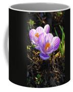 Crocus 0083 Coffee Mug