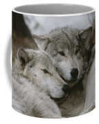 A Couple Of Gray Wolves, Canis Lupus Coffee Mug by Jim And Jamie Dutcher