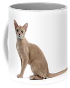 Abyssinian Kitten Coffee Mug