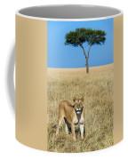 African Lioness Panthera Leo, Serengeti Coffee Mug