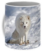 Arctic Fox... Coffee Mug