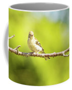 Baby Sparrow Coffee Mug