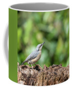 Beautiful Nuthatch Bird Sitta Sittidae On Tree Stump In Forest L Coffee Mug