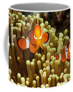 Clown Anemonefish Coffee Mug