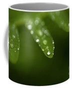 Fern Close-up Of Water Droplets  Coffee Mug