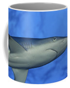 Grey Reef Shark Coffee Mug