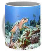 Hawksbill Turtle Feeding On Sponge Coffee Mug by Karen Doody