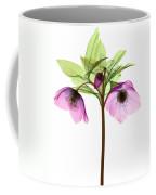 Hellebore Flowers, X-ray Coffee Mug