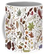 Herbarium Specimen Coffee Mug