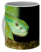 Marchs Palm Pitviper Coffee Mug