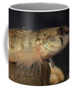 Mobile Logperch Percina Kathae Coffee Mug