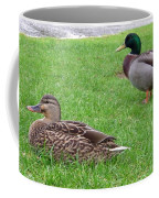 New Zealand - Pair Of Mallard Duck Coffee Mug